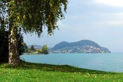 Abedul en costa del pequeño lago suizo Fotos de archivo libres de regalías