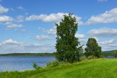 Abedul en el banco del azul del lago Imágenes de archivo libres de regalías