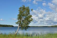 Abedul en el banco del lago azul Fotografía de archivo