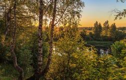 Abedul en el banco del río Fotografía de archivo