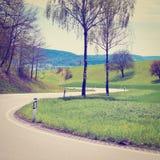 Abedul en el camino Foto de archivo