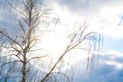 Abedul en el cielo azul Imágenes de archivo libres de regalías