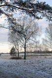 Abedul en el invierno Fotos de archivo libres de regalías