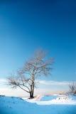 Abedul en el invierno y el cielo, paisaje de la helada Imágenes de archivo libres de regalías