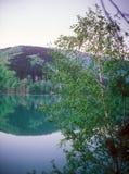 Abedul en el lago. Imagen de archivo libre de regalías