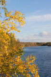 Abedul en el lago Imagen de archivo libre de regalías