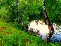 Abedul en el lago Fotografía de archivo libre de regalías