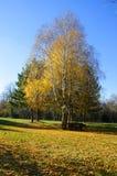 Abedul en el parque en una colina cerca de la ciudad Fotos de archivo libres de regalías