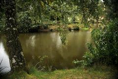 Abedul en el primer del lago Imágenes de archivo libres de regalías