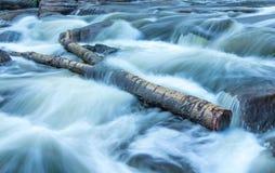 Abedul en el río del bosque Imagen de archivo