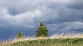 Abedul en el viento Fotos de archivo