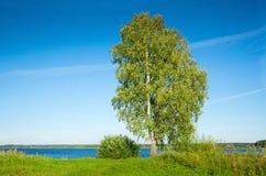 Abedul en la costa del lago Fotos de archivo libres de regalías