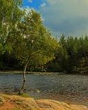 Abedul en la costa del lago en HDR Fotos de archivo libres de regalías