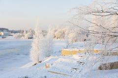 Abedul en la costa en invierno Fotos de archivo libres de regalías