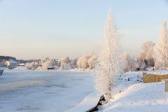Abedul en la costa en invierno Fotografía de archivo libre de regalías