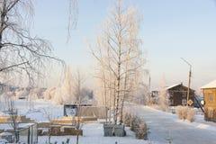Abedul en la costa en invierno Fotografía de archivo