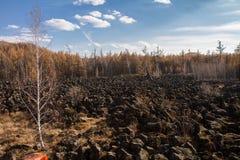Abedul en la lava congelada Fotografía de archivo libre de regalías
