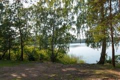 Abedul en la orilla de un lago Fotos de archivo