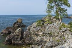 Abedul en la orilla del lago Imagen de archivo libre de regalías