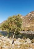Abedul en la orilla del río Imagenes de archivo