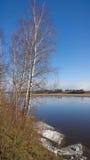 Abedul en la orilla del río Fotografía de archivo libre de regalías