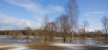 Abedul en la orilla del río Fotos de archivo