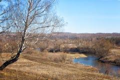 Abedul en la orilla del río en un día soleado Imágenes de archivo libres de regalías