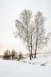 Abedul en la orilla en el invierno Foto de archivo
