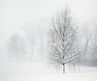 Abedul en niebla suave de la mañana Fotografía de archivo libre de regalías