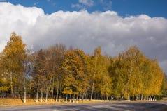 Abedul en otoño y cielo Imagen de archivo