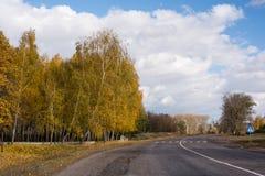 Abedul en otoño y cielo Foto de archivo libre de regalías