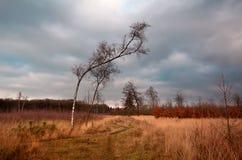 Abedul en prados salvajes en Dwingelderveld Fotos de archivo libres de regalías