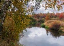 Abedul en primero plano y río del otoño en fondo Imagen de archivo libre de regalías