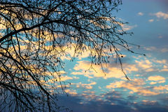 Abedul en un fondo de una puesta del sol del invierno, manipulación de la foto Fotografía de archivo libre de regalías