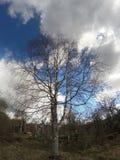 Abedul en un fondo del cielo azul en la primavera temprana, ramas sin las hojas Fotos de archivo libres de regalías