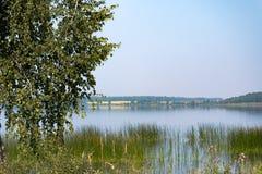 Abedul en un fondo del lago Fotos de archivo