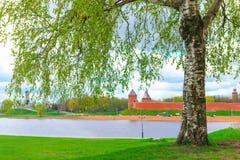 Abedul en un fondo del Novgorod el Kremlin Imágenes de archivo libres de regalías