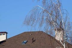Abedul en un fondo del tejado de la casa Imagen de archivo