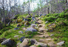 Abedul Forest Path Fotos de archivo