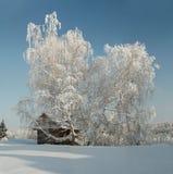 Abedul helado ancho delante de la casa de madera en el invierno Fotos de archivo libres de regalías