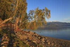Abedul hermoso en el banco de un lago Fotos de archivo libres de regalías