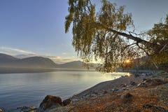 Abedul hermoso en el banco de un lago Foto de archivo