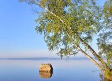 Abedul inclinado sobre el agua del lago Fotos de archivo