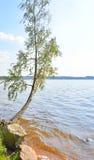 Abedul inclinado sobre el agua del lago Fotografía de archivo libre de regalías