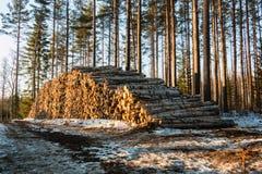Abedul llenado de la madera para pasta papelera por un camino forestal en primavera Fotos de archivo libres de regalías