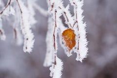 Abedul nevado en invierno Fotografía de archivo