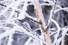Abedul nevado en invierno Fotos de archivo
