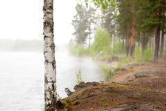 Abedul por el lago de niebla Fotografía de archivo libre de regalías