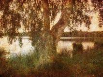 Abedul retro Fotos de archivo
