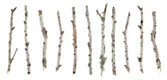 Abedul seco de las ramas de la colección aislado en blanco Foto de archivo libre de regalías